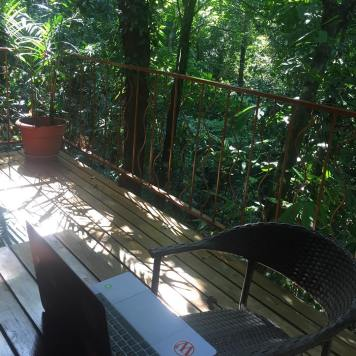 My office: Jungle Edition